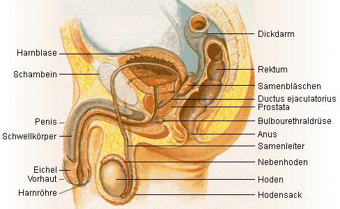 Prostataoperation
